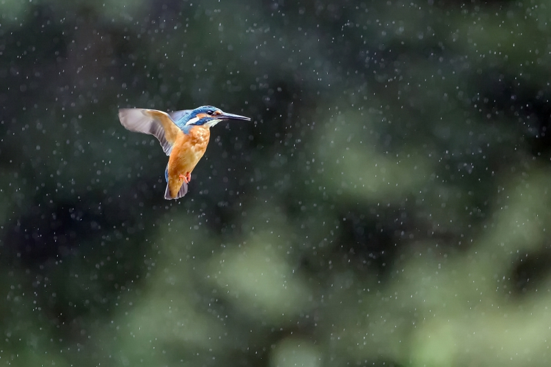 Flying in the rain