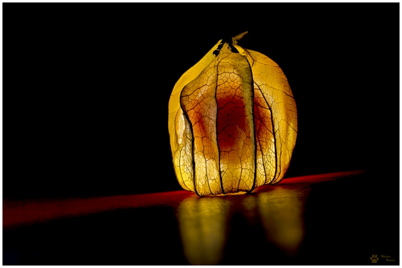*Bright physalis*